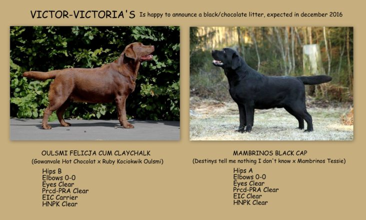 Eva Spriet Victor Victoria's